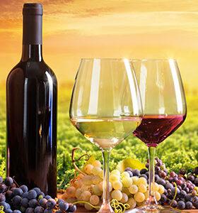 A Vue de Nez - 75cl Languedoc-Roussillon, Vins Rouges, Vins Biologiques & Naturels, Jeff Carrel, achat vin jeff carrel, Jeff Carrel, vin blanc jeff carrel, vin jeff carrel, vin jeff carrel avis, vin le fiston jeff carrel, vin les darons jeff carrel, vin orange jeff carrel, vin rosé jeff carrel, vin rouge jeff carrel